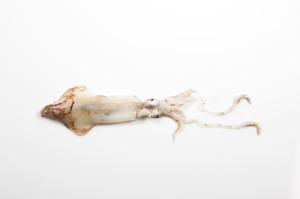 calamaro