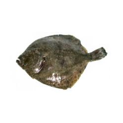 pesce passera