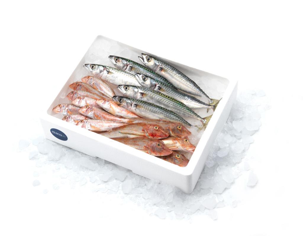 pescolo_ADRIATICA_pesce pescato