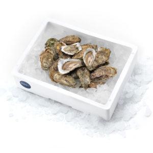 cassetta ostriche Pescolo OYSTER