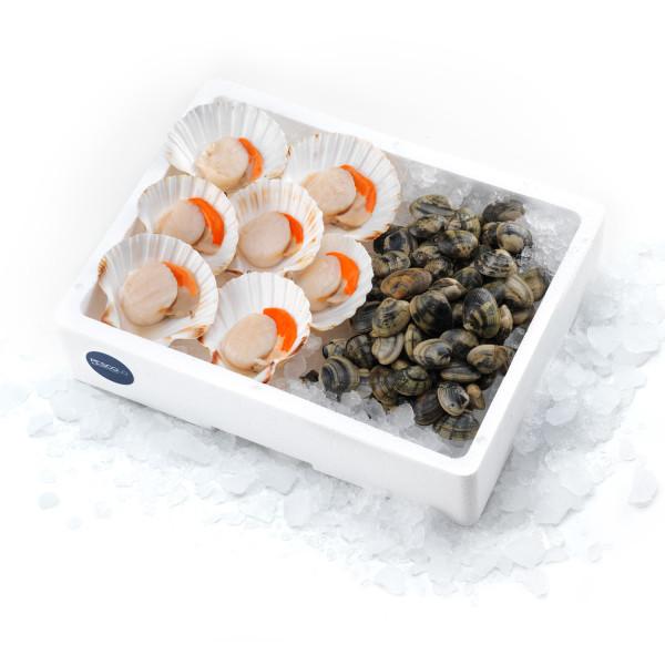 pescolo_SHELLS-molluschi
